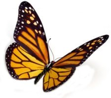 About us and the butterfly effect