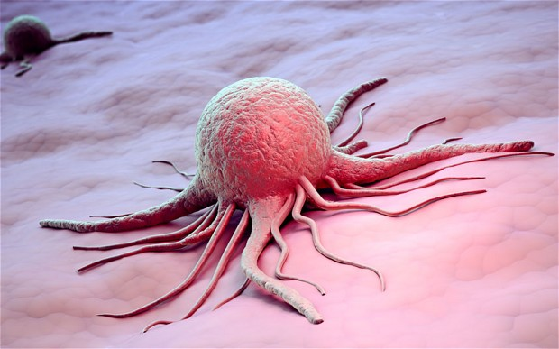 Breast Cancer Cell (www.telegraph.co.uk)