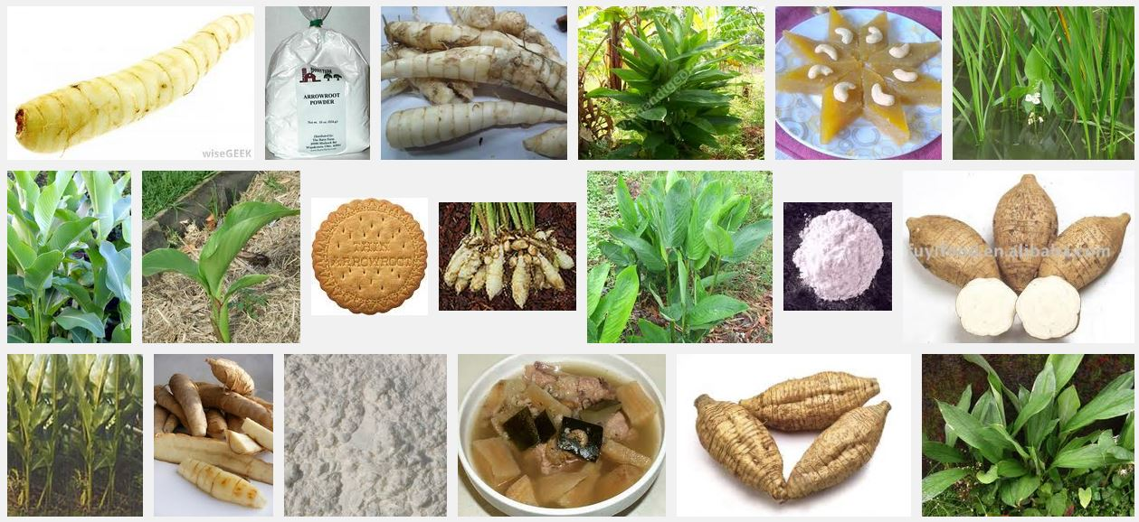 Arrowroot in Various Forms