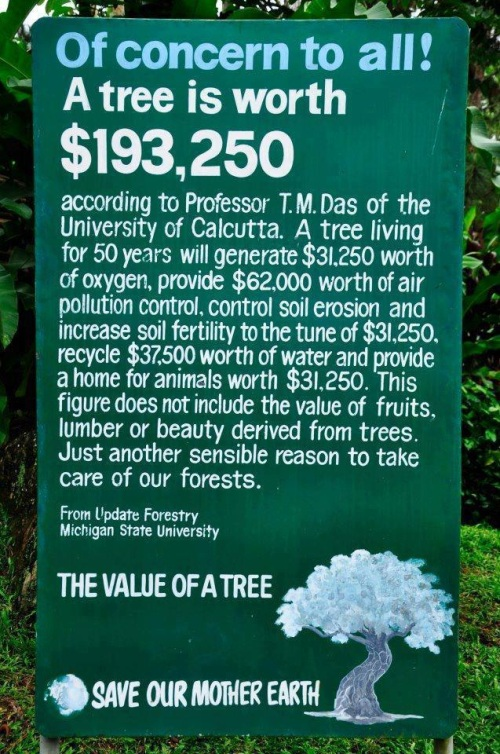 A Tree is Worth $193,250