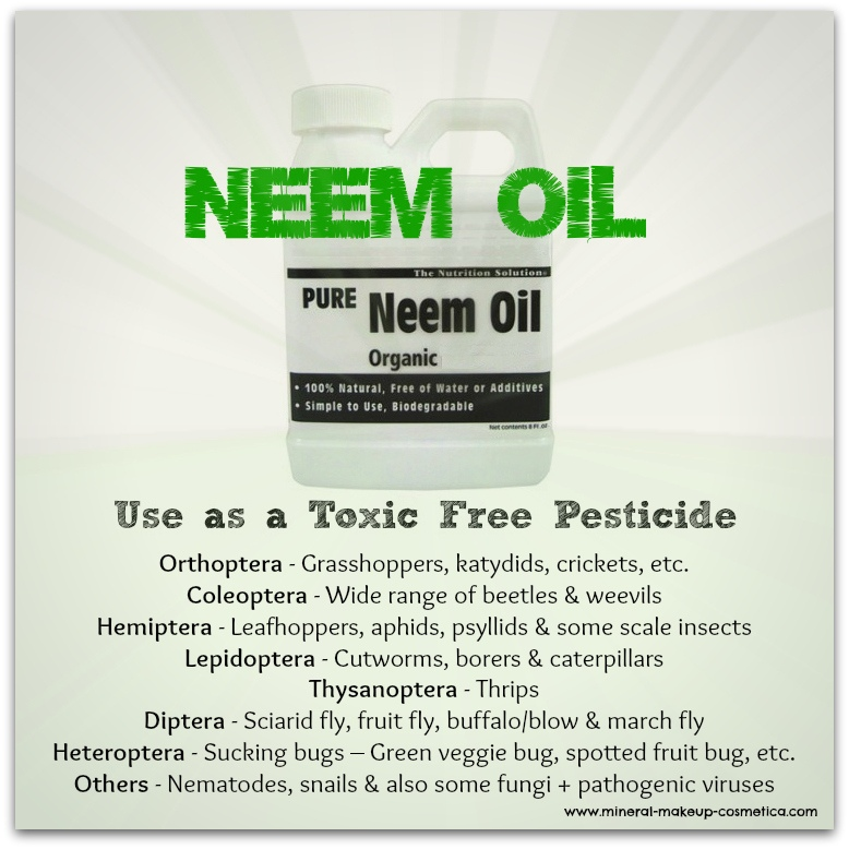 Infographic - Neem Oil as a Toxic Free Insecticide