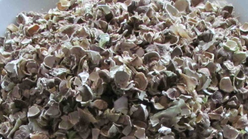 Broken Moringa Shells before Grinding