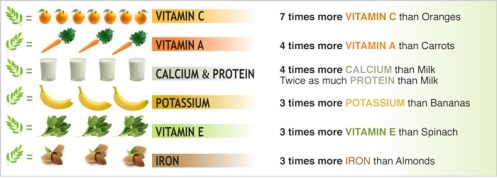 Moringa Comparative Table