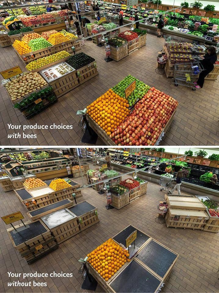 Foods Requiring Bee Pollination