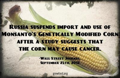 Russia Suspends Monsanto's GM Corn due to Cancer Risk