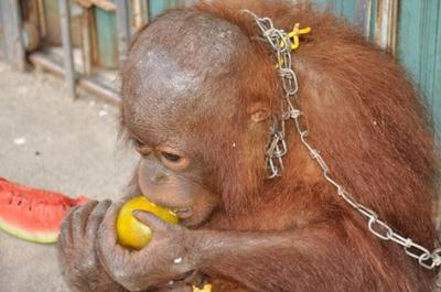 Our Governments are not doing enough to stop animal cruelty - You have to do it