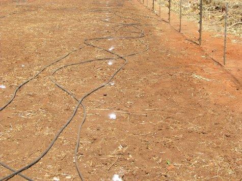 Natural Resources Moringa Spacing