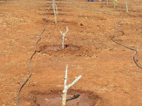 Natural Resources Moringa Irrigation