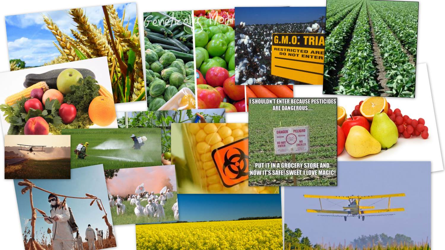 GMO Food and our World