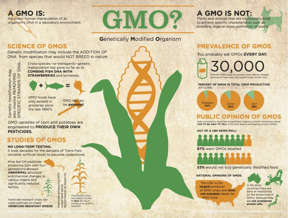 all the concerns related to the genetically modified foods