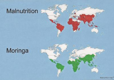 Malnutrition Map (Courtesy of www.treesforlife.org)