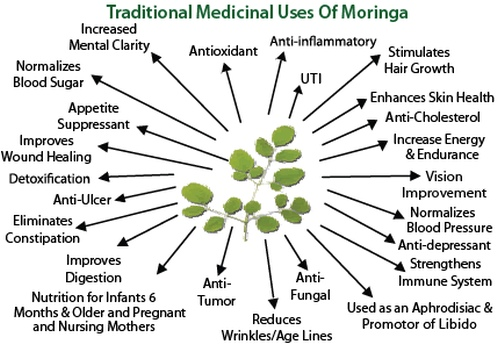 Traditional Medicinal Uses of Moringa