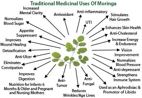 Traditional Medicinal Uses of Moringa