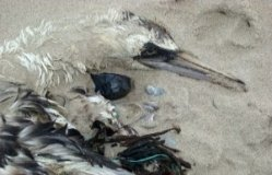 Dead Wildlife