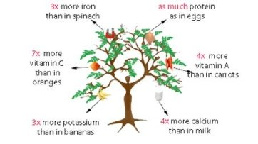 Natural Beauty Miracle Tree