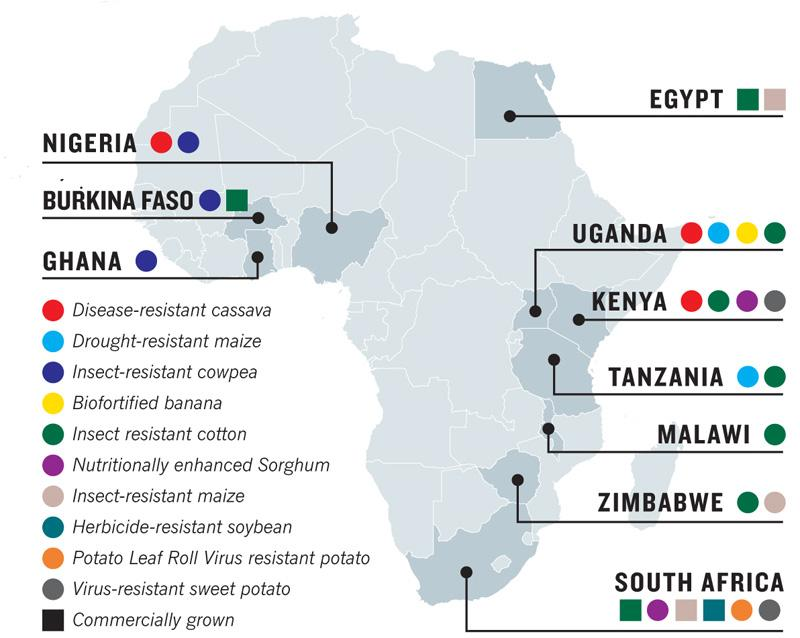 GMO Food and Cotton Trials in Africa