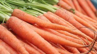 Drugs Made from GMO Carrots
